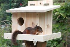 Eichhörnchen Kobel Bauanleitung Skizze Bauplan Schlafhaus – Kiki