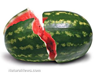 EATING WATERMELONS CAN HELP REDUCE BLOOD PRESSURE. According to a new study, a pre-hypertensive condition is one of the major risk factors for serious health threats such as strokes and heart attacks. However, not too many people are aware that simply eating watermelons can be very effective in naturally fighting off pre-hypertension and considerably lessening the risk for heart attacks and strokes.
