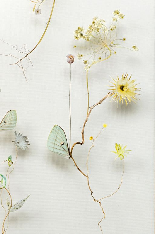 "ANNE TEN DONKELAAR:  ""Flower Construction #45"" (w:50 h:130 d:6.5 cm) - 3D collages made from pressed wildflowers, dried stems, and paper cutouts on top of tiny little pins"