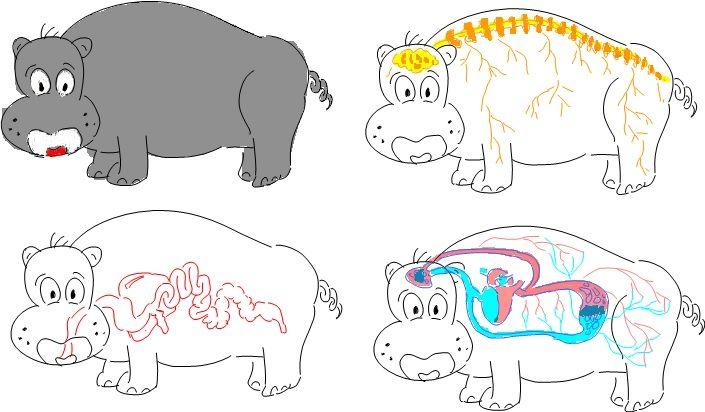 Animal System on Hippo