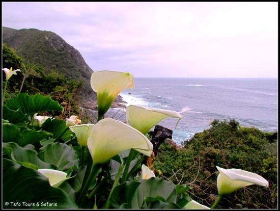 Avoca Special / Cape Town / Pp R5 797 + Txs / Valid till Sep 2013 /  https://www.facebook.com/photo.php?fbid=438748982881002=a.370442539711647.86796.369549089800992=1