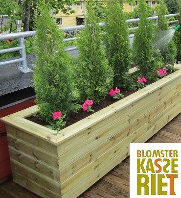 Isolert blomsterkasse fra Blomsterkasseriet på takterrasse. Tuja i blomsterkasse