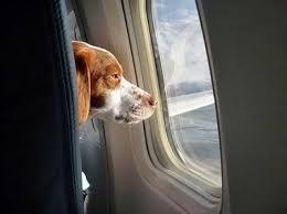 Tips για άνετο ταξίδι με το κατοικίδιο σου! http://blog.air2go.gr/2013/09/tips.html