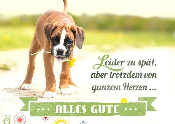 Postkarte Alles Gute Leider Zu Spat Geburtstag Vergessen