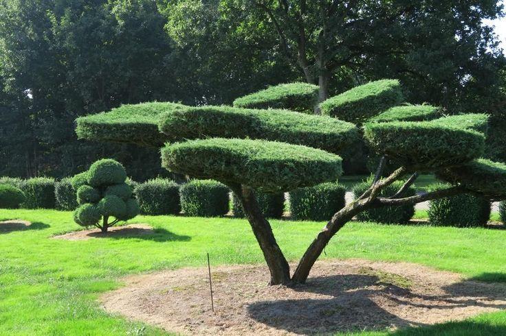 Gartenbonsai gartengestaltung bonsai bonsaigarten for Gartengestaltung rhododendron
