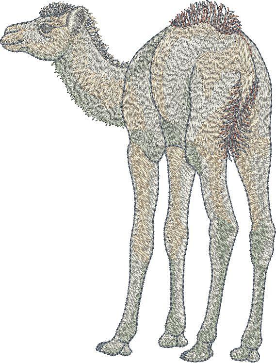 Sue Box Camel Embroidery design.