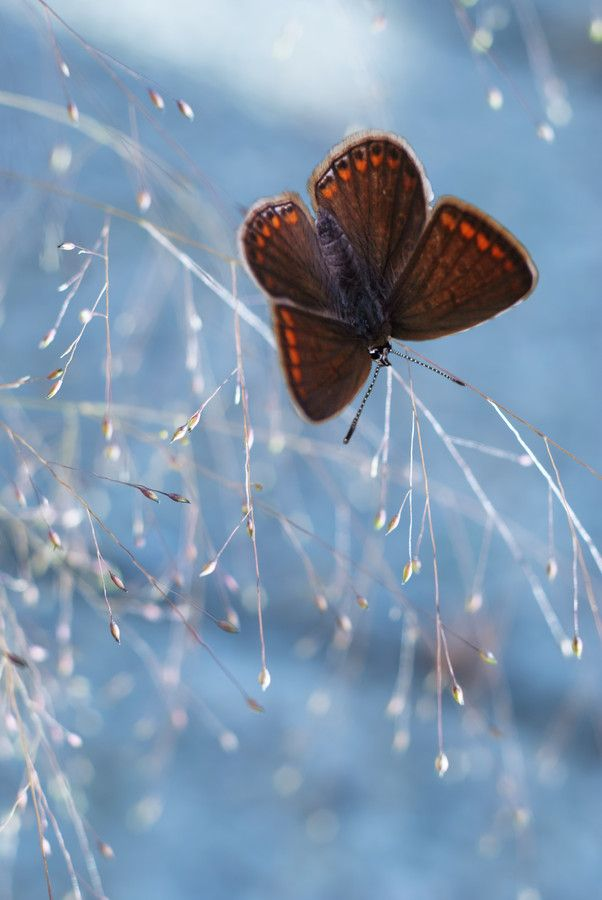 Butterfly by Dragana Trajkovic on 500px
