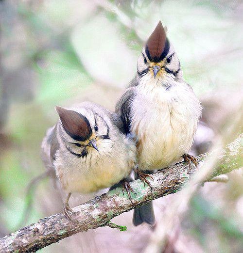 Las mejores 96 imágenes de Aves en Pinterest | Aves, Insectos y Las aves