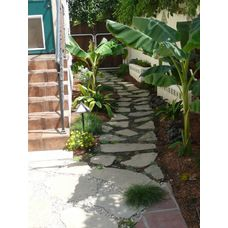 Banana trees along narrow strip make big impact