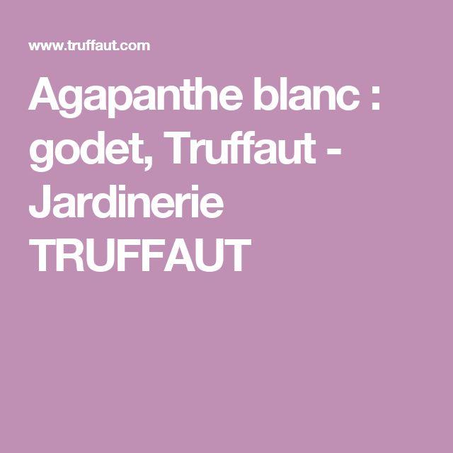 Agapanthe blanc : godet, Truffaut - Jardinerie TRUFFAUT