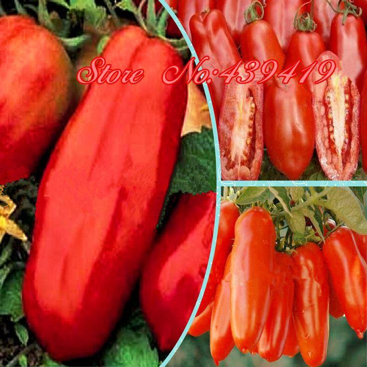 Бонсай фрукты семена овощных культур 50 шт. семена помидоров сан - дж. марцано в очень привлекательной форме, Превосходный вкус, Устойчивы к болезням