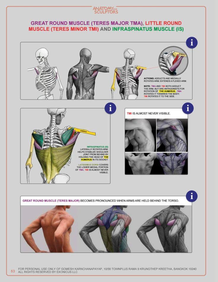 ISSUU PDF Downloader | Anatomy reference, Anatomy for ...