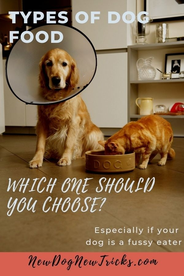 Types Of Dog Food Which One Should You Choose Types Of Dog