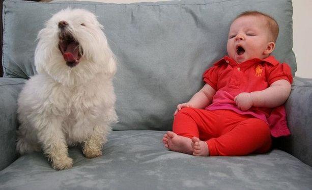 A Real Snooze!: Dogs, Precious Children, Real Snooz, Animal 20, Sooooo Sleepy, Baby, Amazing Animal, Photo, Adorable Kids