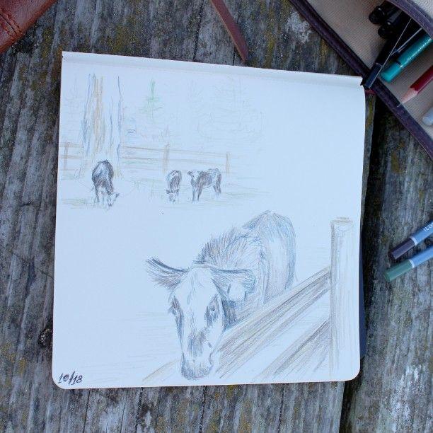cow sketch by mila_hofman