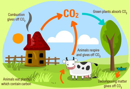 The carbon cycle Best and most simple explanation