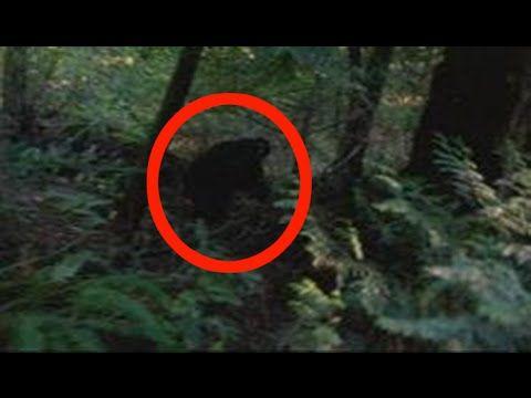 Deer Hunter Shocked by Bigfoot Encounter