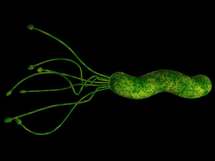 L'helicobacter pylori è un batterio che può causare ulcera gastroduodenale o gastrite. I principali sintomi di queste due patologie sono caratterizzati dal bruciore di stomaco, dolore addominale e reflusso gastroesofageo. Se si soffre di questo disturbi si deve prediligere una dieta ricca di verdura, frutta, carne e pesce magri, cotti con metodi di cottura leggeri.