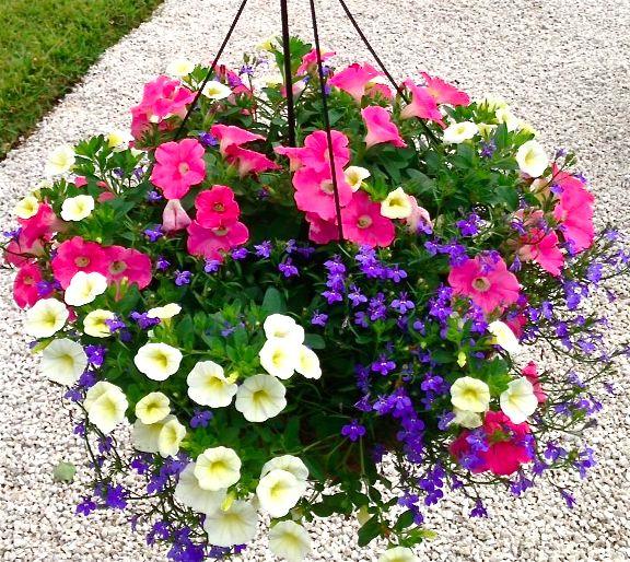 Las 25 mejores ideas sobre macetas de flores colgantes en for Jardines pequenos para escuelas