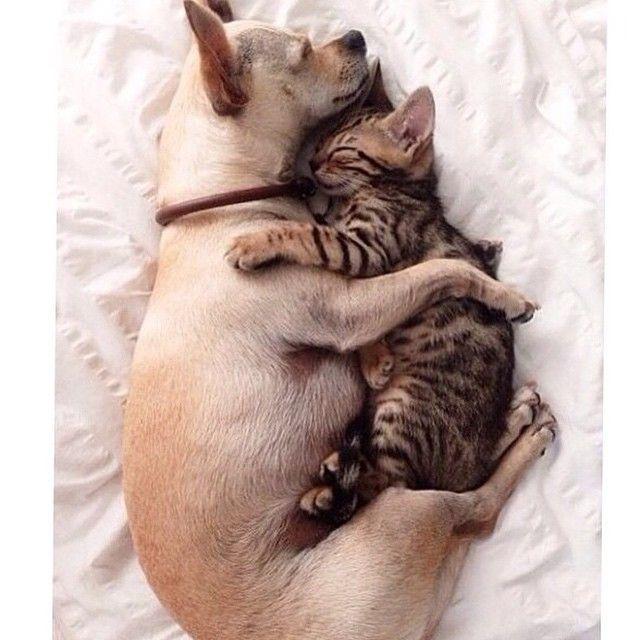 Love#catdoglove#