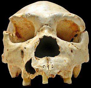 Paleolithic - Wikipedia