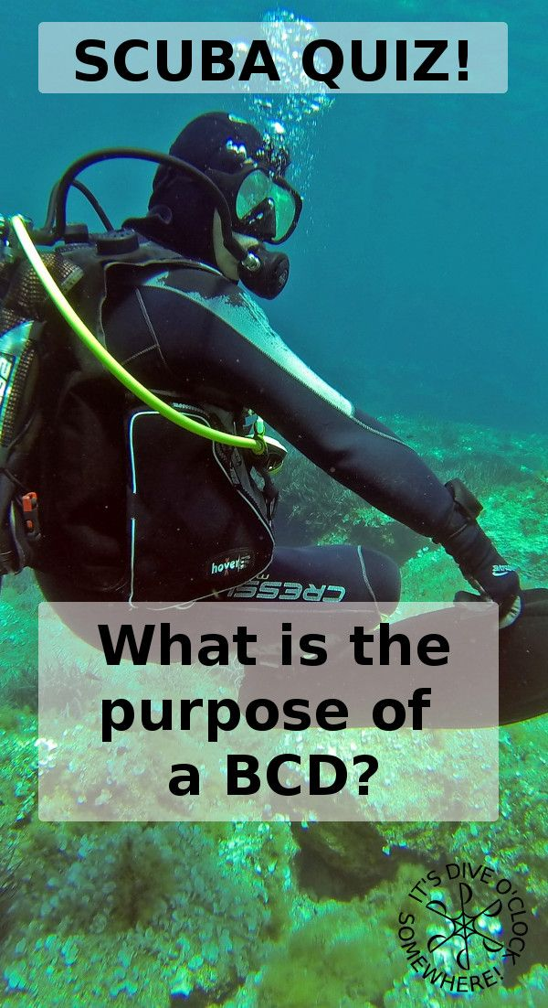 SCUBA QUIZ: What is the purpose of a BCD?  When you are selecting your dive gear somebody might ask you what kind of BCD you want. To answer that question you need to know what a BCD is and where you use it for when SCUBA diving. What is the purpose of a