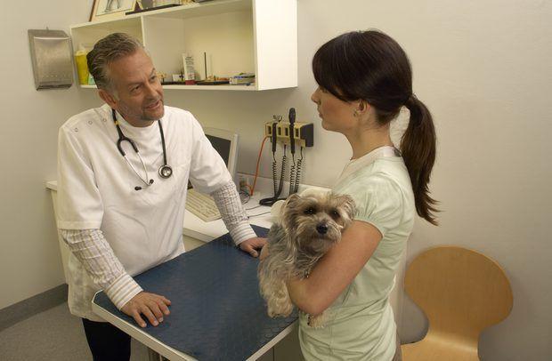 Tratamiento para colapso traqueal en perros