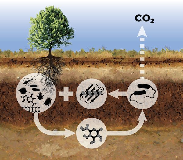 What things give off carbon dioxide?