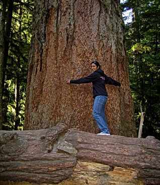 Cathedral Grove | British Columbia | Our Big Tree Heritage