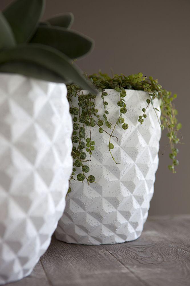 Vase Elegant Nature - Planted with succulents