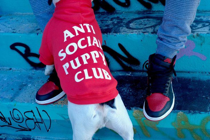 Pawkier – Teraz Twój pies też może polubić streetwear!