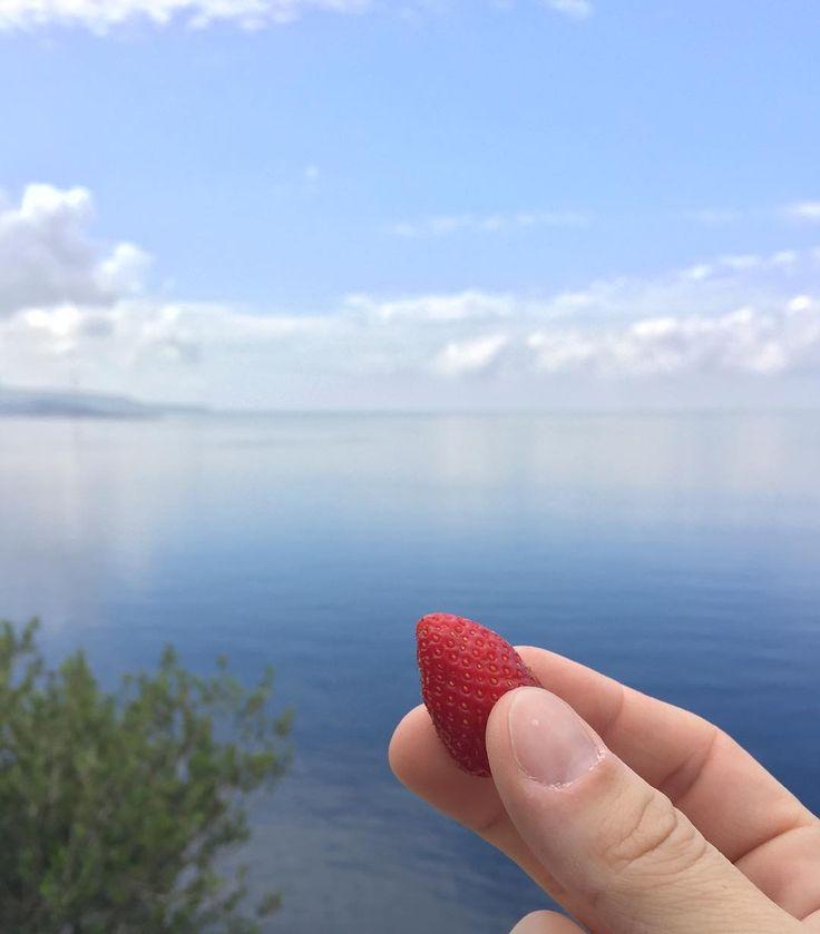 sei per me la macchia rossa in un mare blu   #igersreggiocalabria  #wwim13reggiocalabria  #instameetscilla  #scilla  #castelloruffo  #castello  #castle  #seemycity  #wwim13  #reggiocalabria  #whatitalyis  #communityfirst  #calabria  #igerscalabria  #vscocam  #sea  #mare  #fragola  #strawberry  #food  #nofilter #foodporn  #enjoy #whileinbetween  #vsco  #igersdellostretto  #bbctravel  #clouds  #panorama #nuvole