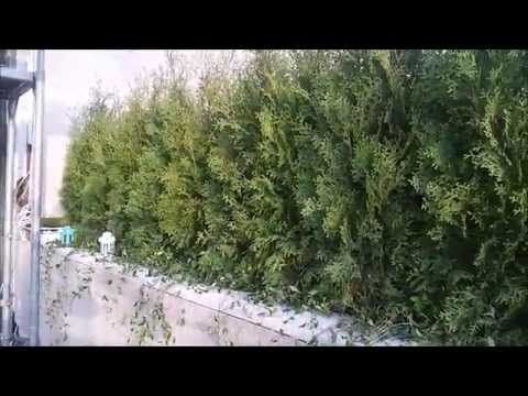 Озеленение террасы Днепропетровск, сад на террасе - YouTube
