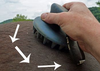 How to Groom Your Horse to Shine in 4 Easy Steps - Naturally!