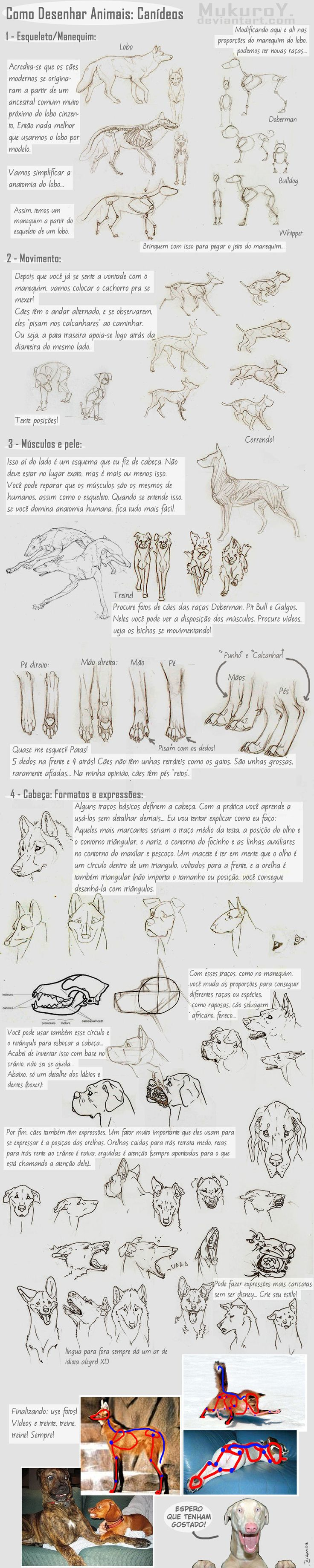 Dog / Wolf Tutorial - Canideos by ~MukuroY on deviantART - In Spanish - Great pic's!