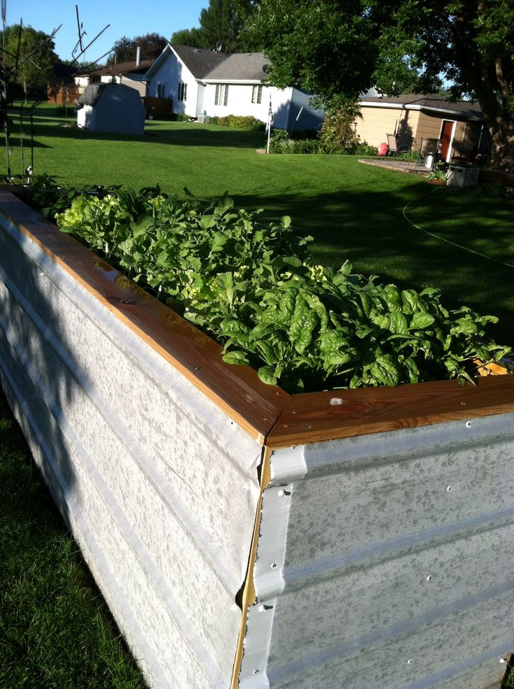 Raised Vegetable Beds From Repuposed Galvanized Roofing Tin
