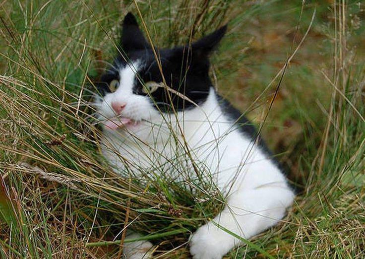 take that, grass!