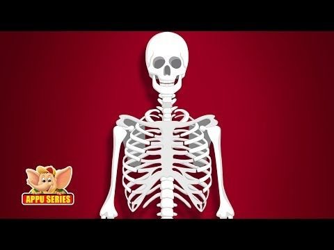 The Skeletal System , Skeleton Dance -How Body Works-with Quiz on Bones - YouTube