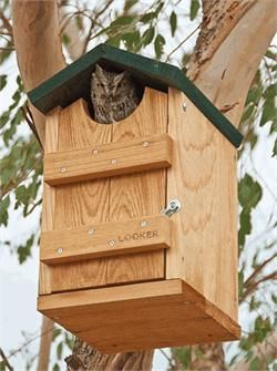 looker screech owl house - Big Bird House Plans