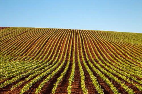 A photo a day #farmlife