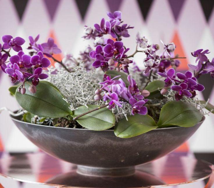 adelaparvu.com despre schimbarea ghiveciului la orhidee, Foto Floradania (4)
