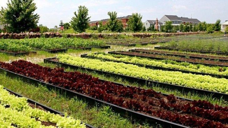 Organik tarım destek başvurularını kaçırmayın