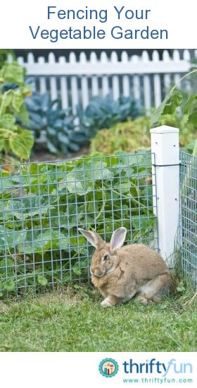 How many times have you carefully planted a vegetable garden, only to have the fruits of your labor eaten by wildlife? The only real solution is to erect a fence that keeps the animals out.