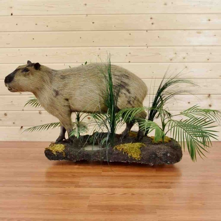 Capybara Hunting Trophy for Sale - SW8984 - Safariworks Taxidermy Sales