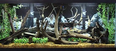 55 Gallon Aquarium                                                       …