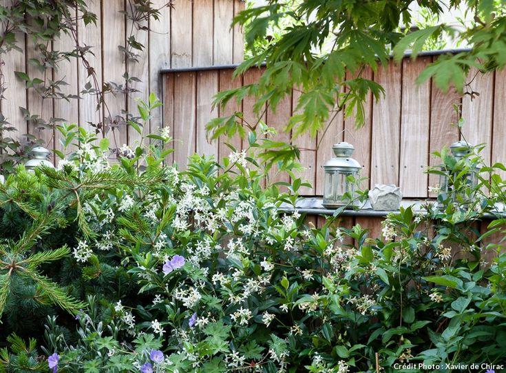 Les 25 meilleures id es concernant plantes grimpantes sur for Plante decoration terrasse