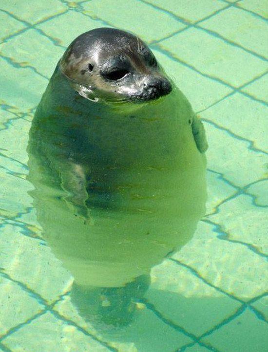 So stehst Du im Nichtschwimmerbecken.