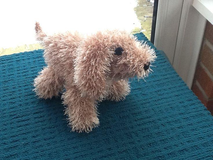 Hand knitted Cockapoo /Golden Cocker Spaniel Puppy.