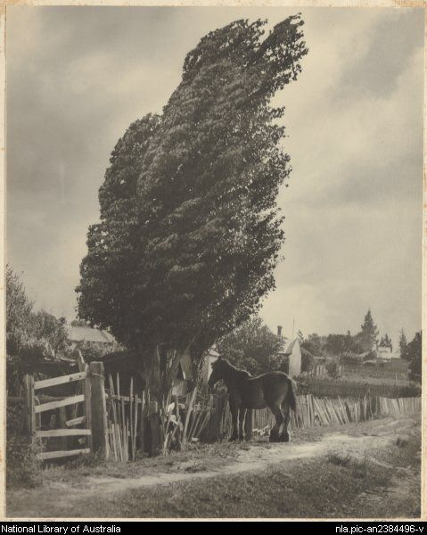 Cazneaux, Harold, 1878-1953. Windy day [picture]