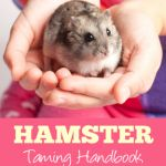 10 Fun Things to Do with Your Hamster - Dwarf Hamster Blog